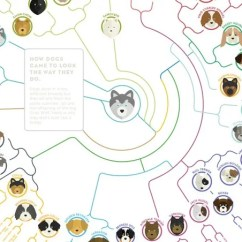 Diagram Of Evolution Timeline Create A Venn Comparing Osmosis And Diffusion Simple Chart Shows How The Dogs We Love Today Evolved From Wolf