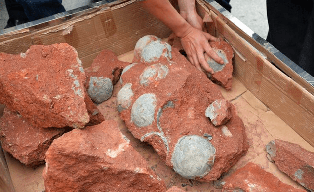 Dozens Of Dinosaur Eggs Unearthed By Chinese Road Workers