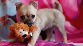 Image result for happy dog with toy