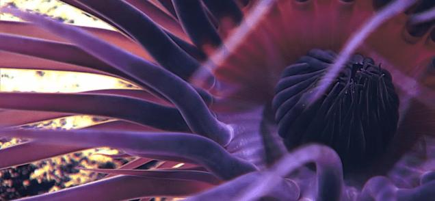 Stunning Footage Captures Never Before Seen Deep Ocean Creatures