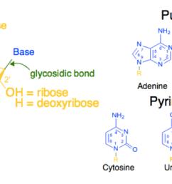 dna nucleotide and basis diagram [ 1200 x 675 Pixel ]