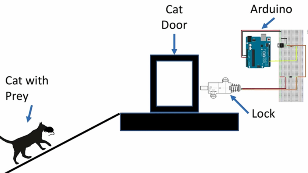 medium resolution of dog and cat eye diagram