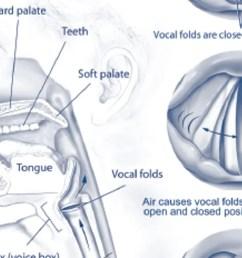 vocal fold diagram [ 1200 x 675 Pixel ]