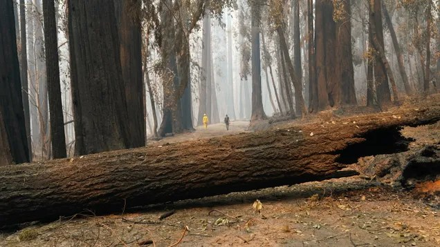 fsuluedajpcpnolei0av California's Carbon Offset Program Is a Complete Disaster | Gizmodo
