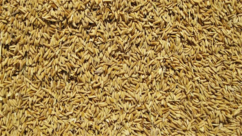 kitchen inventory app portable kitchens is brown rice really that much healthier than white rice?