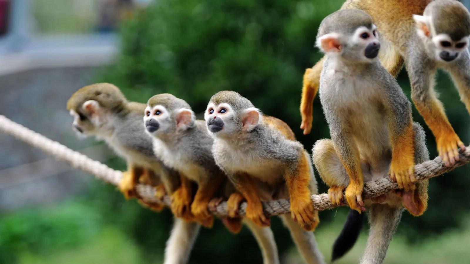 Monkeys And Bananas Cute Wallpaper Instagram Is Warning Users That Cute Exotic Animal
