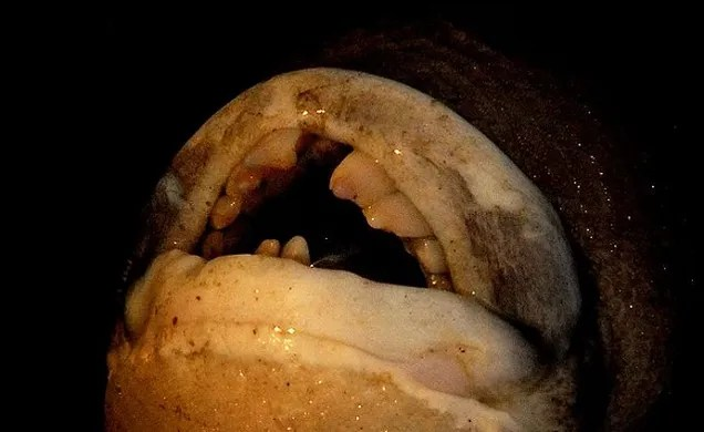 Welcome To The Nightmare World Of Sea Creatures With Human Teeth