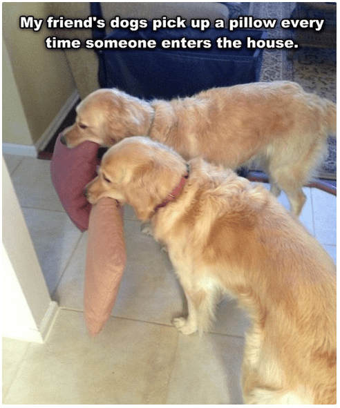 Why Are Dogs So Insanely Happy to See Us When We Get Home?