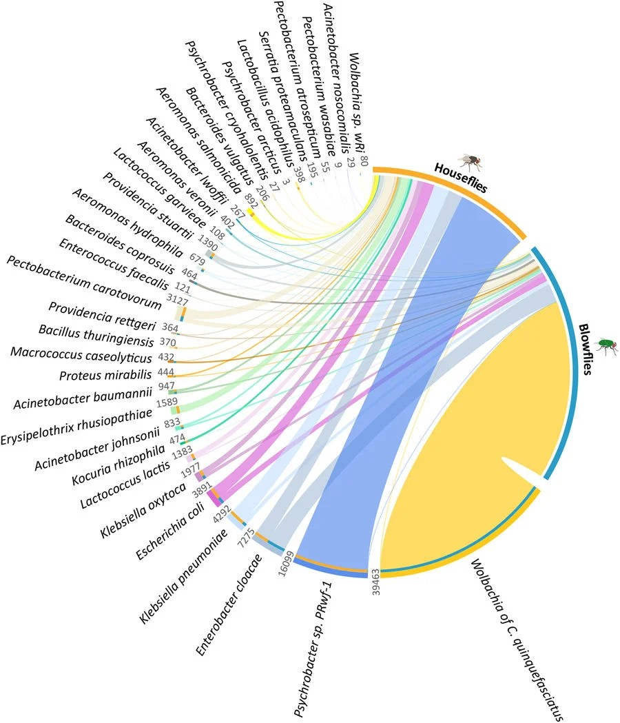 medium resolution of distribution and abundance of 33 shared bacterial species in the two species of flies studied image a c m junqueira et al 2017