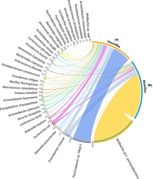 small resolution of distribution and abundance of 33 shared bacterial species in the two species of flies studied image a c m junqueira et al 2017