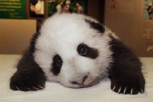 Sad Panda | Know Your Meme