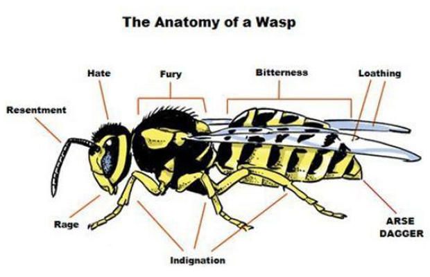 hornet anatomy diagram 2 pole relay wiring of a wasp proper know your meme the bitterness loathing hate fury resentment arse dagger rage indignation