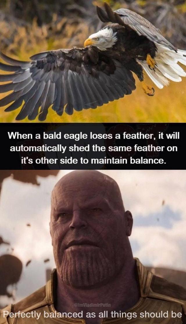 Thanos Balance Meme : thanos, balance, Thanos, Perfectly, Balanced