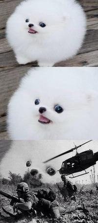 Dog War Flashback : flashback, Flashback, Parodies:, Image, Gallery, (Sorted, Score), (List, View)