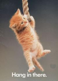 Hang In There Cat Poster Original 70s : there, poster, original, There,