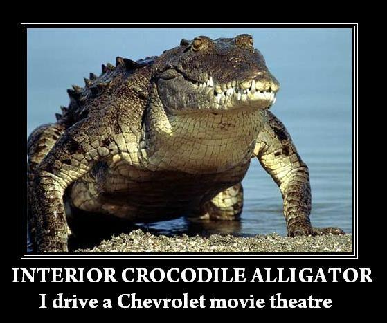 image 64857 interior crocodile
