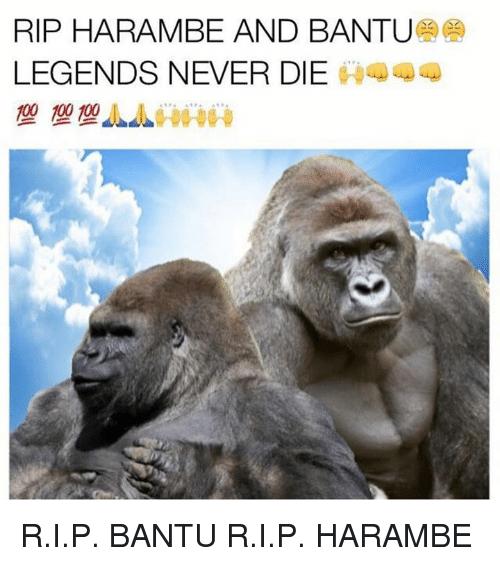 legends never die harambe