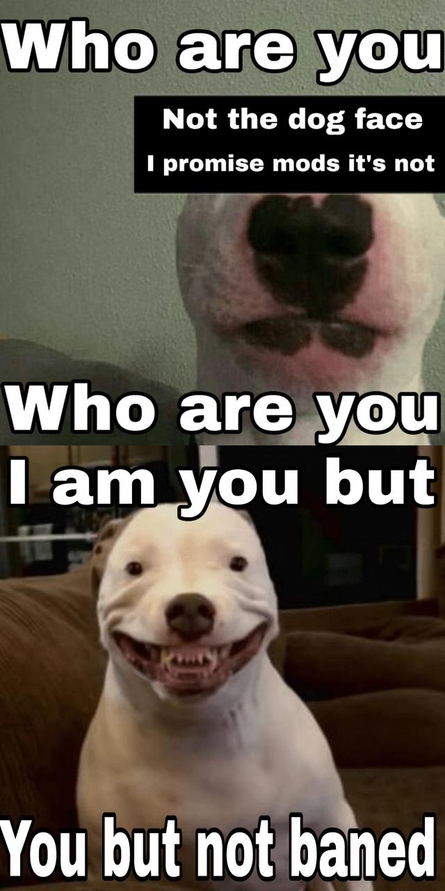 Pitbull Dog Meme : pitbull, Nelson, Terrier, Walter