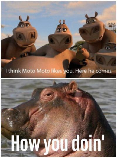 I Think Moto Moto Likes You Elmo : think, likes, Download