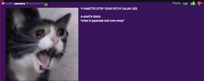 #7 to #6 . camzore (04/03/2017) Reply +36 Y-YAMETEl STOP YOUR FILTHY GAJIN LIES A-ANATA BAKA *cries In japanese and runs awey* Cat Mammal Small to medium-sized cats Felidae Whiskers Photo caption Carnivore Nose Organism Domestic short-haired cat Snout Kitten