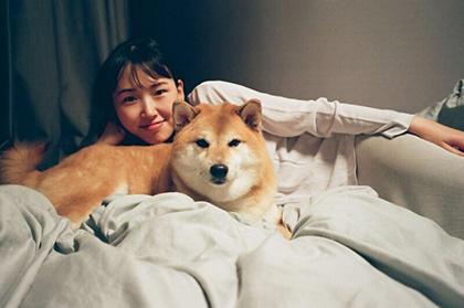 Shiba Inu Akita Inu Dog breed Dog Mammal Vertebrate Canidae Shiba inu Dog breed Akita inu Carnivore Companion dog