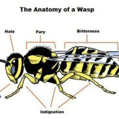Bumble Bee Diagram Ics Planning Cycle Wasp Body Wiring All Data Anatomy Of A Proper Know Your Meme Bat The