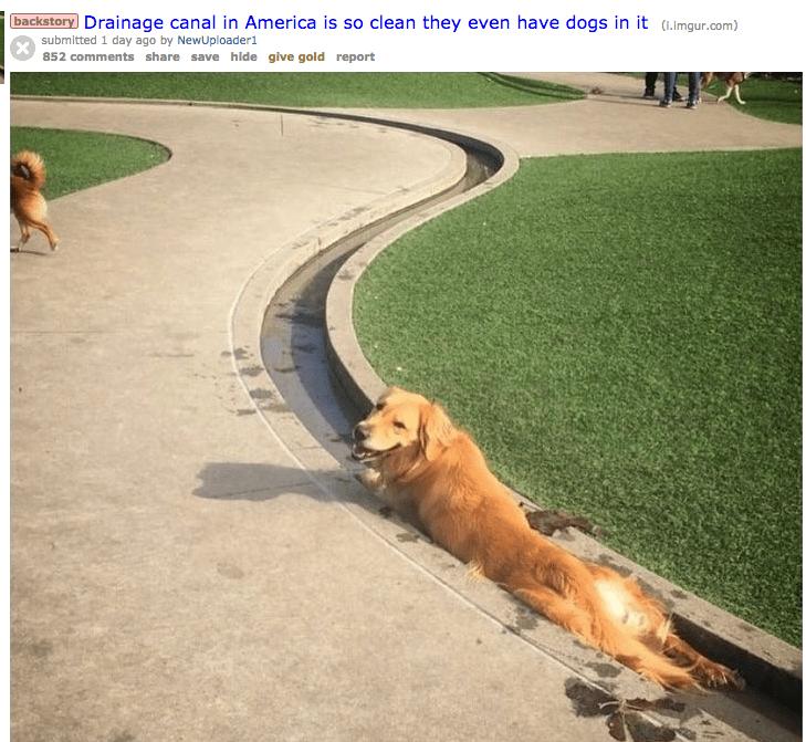 doggo drainage canal so