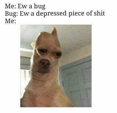ew a bug dogs