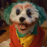Halloween 2019 Costume 2 Dogs Know Your Meme