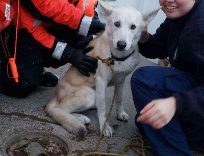 Coast Guard uses macaroni to rescue dog stranded on island ...