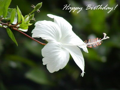Happy Birthday! White Flower Happy Birthday