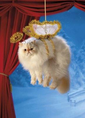 LOL Cat Angel Funny MyNiceProfile Com