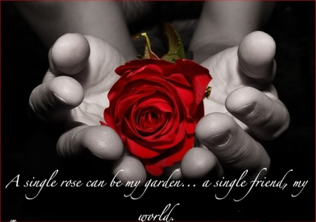 A Single Rose Can Be My Garden A Single Friend My