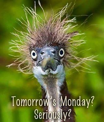 Tomorrows Monday Seriously Sunday