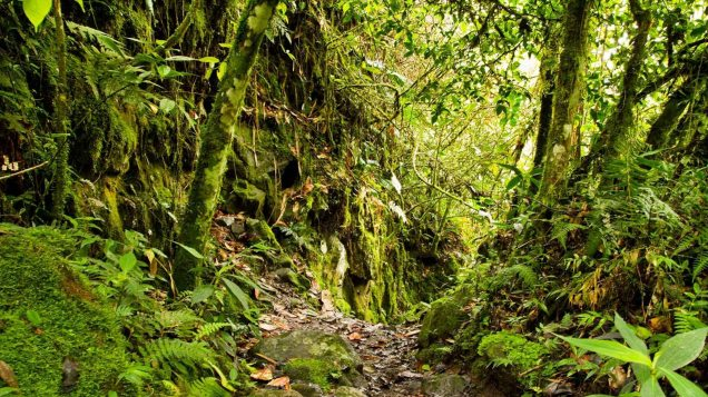 In this episode of wildlife world, we begin to explore the rainofrests of central america and the wildlife it contains.the song is called paradise by ross bu. Rainforest Habitat Facts And Photos