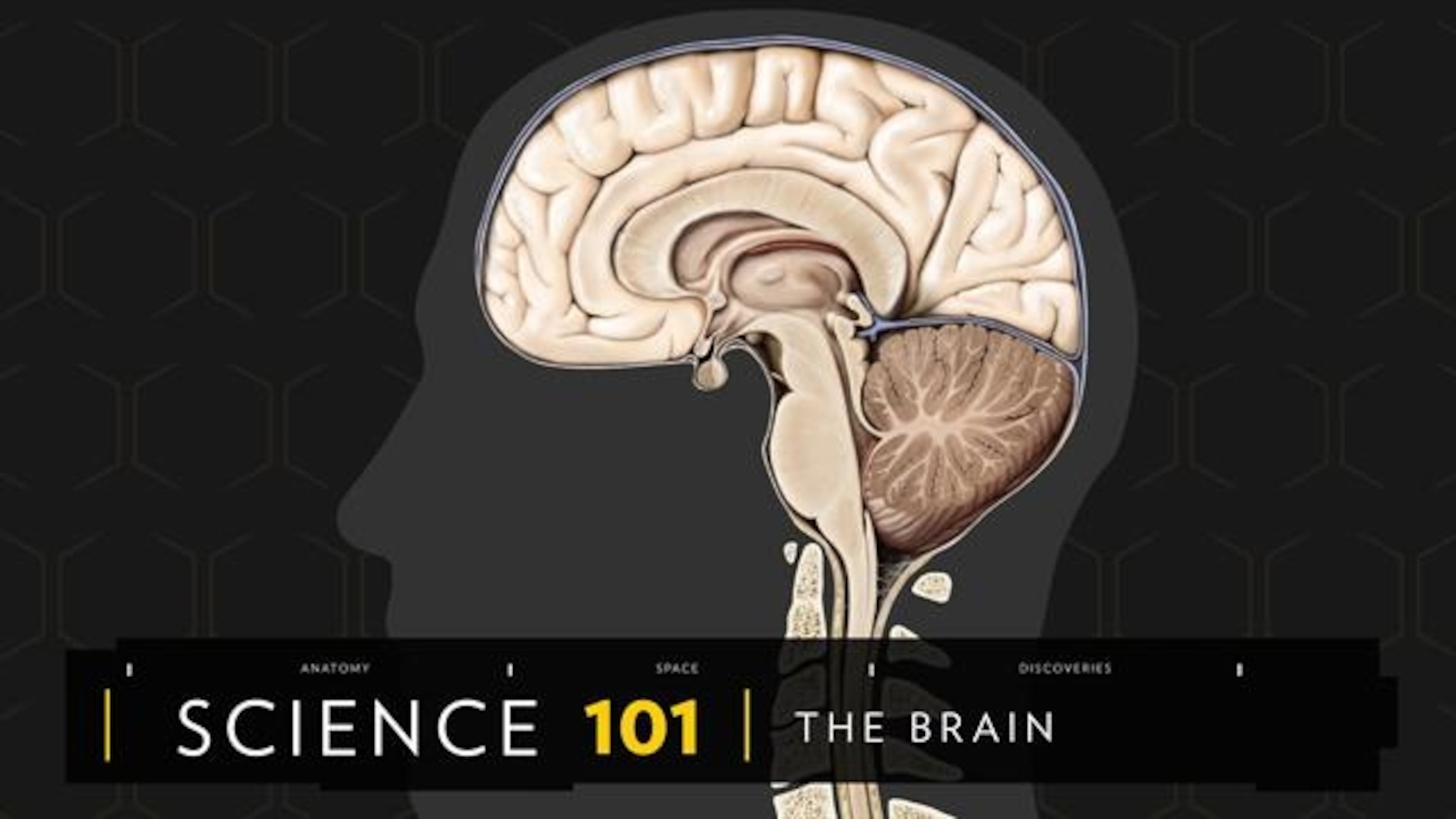 hight resolution of Human Brain: facts and information