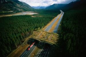 How natural bridges over roads make animals – and humans – safer