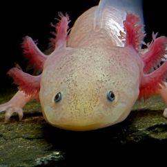 Kitchen Salamander Small Space 水蝾螈的类型需要2018 Mastodoc Com 關於房屋訂單設備的好想法 水蝾螈的类型需要