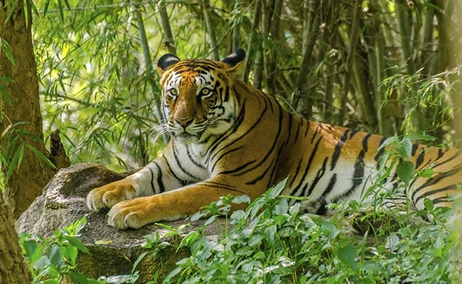Image result for images of Periyar Tiger Reserve