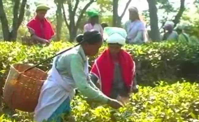 Hit Hard In 2nd Covid Wave, 1% Of Assam Tea Workers Have Got Both Jabs