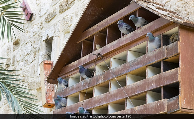 pigeons-generic-istock_650x400_81523790746.jpg (650×400)
