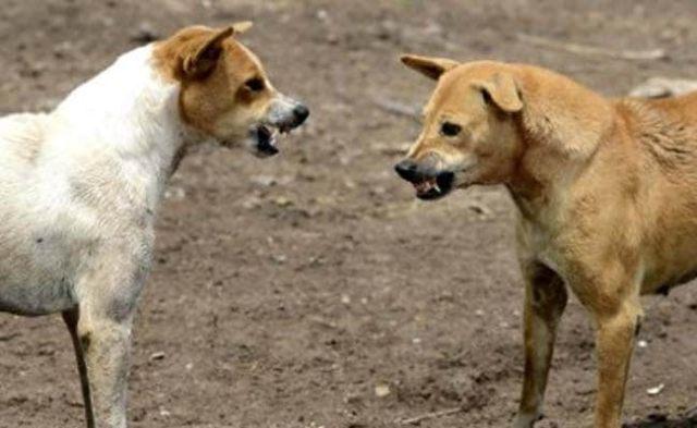 Nagaland Bans Dog Meat After Uproar On Internet