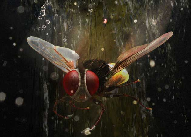 Image result for eega