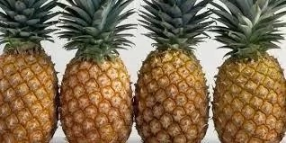 Steps To Start Pineapple Business And Tips To Succeed