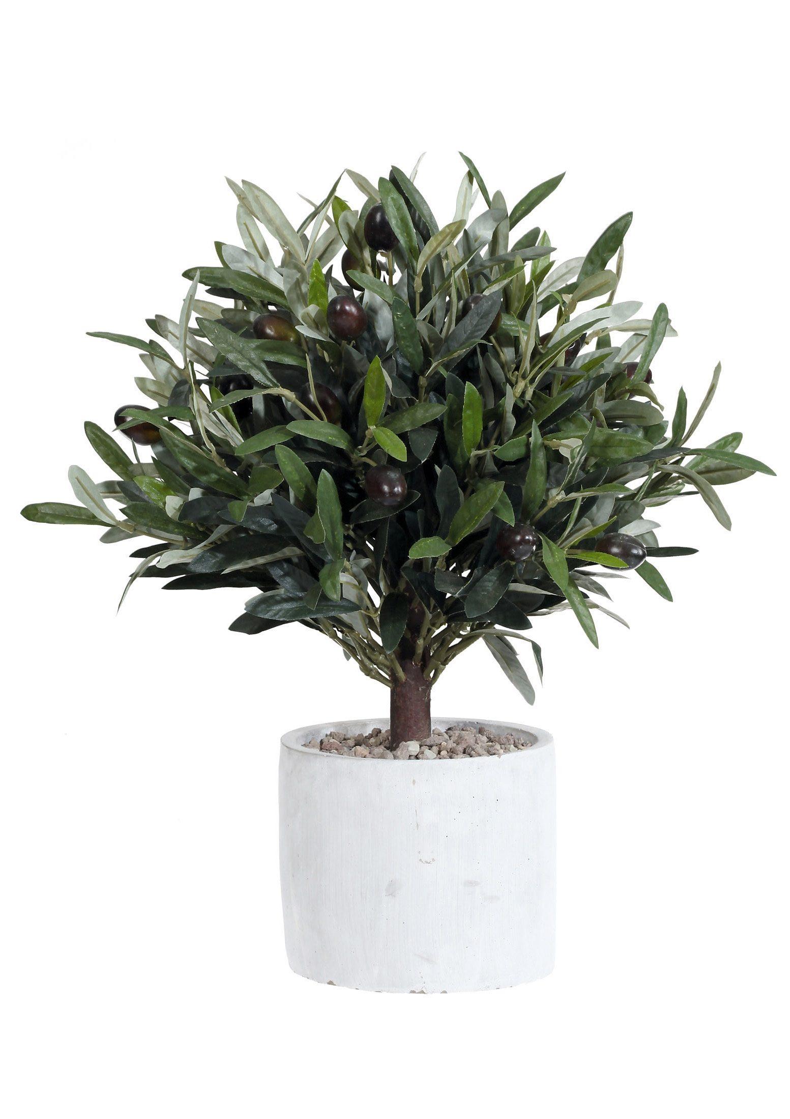 Home affaire Kunstpflanze Olivenbaum kaufen  OTTO