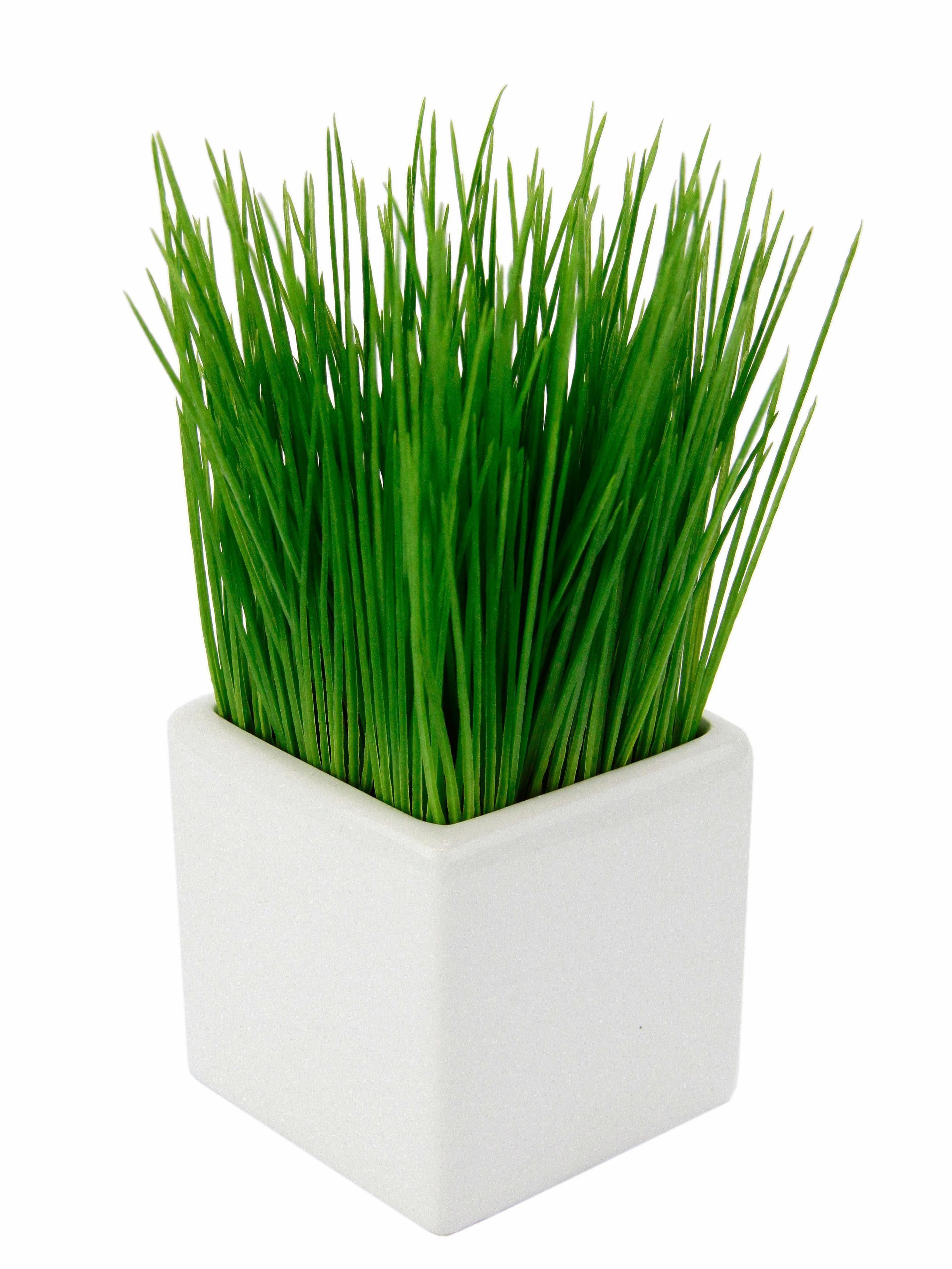Kunstpflanze Gras In weiem Topf aus Keramik online kaufen  OTTO