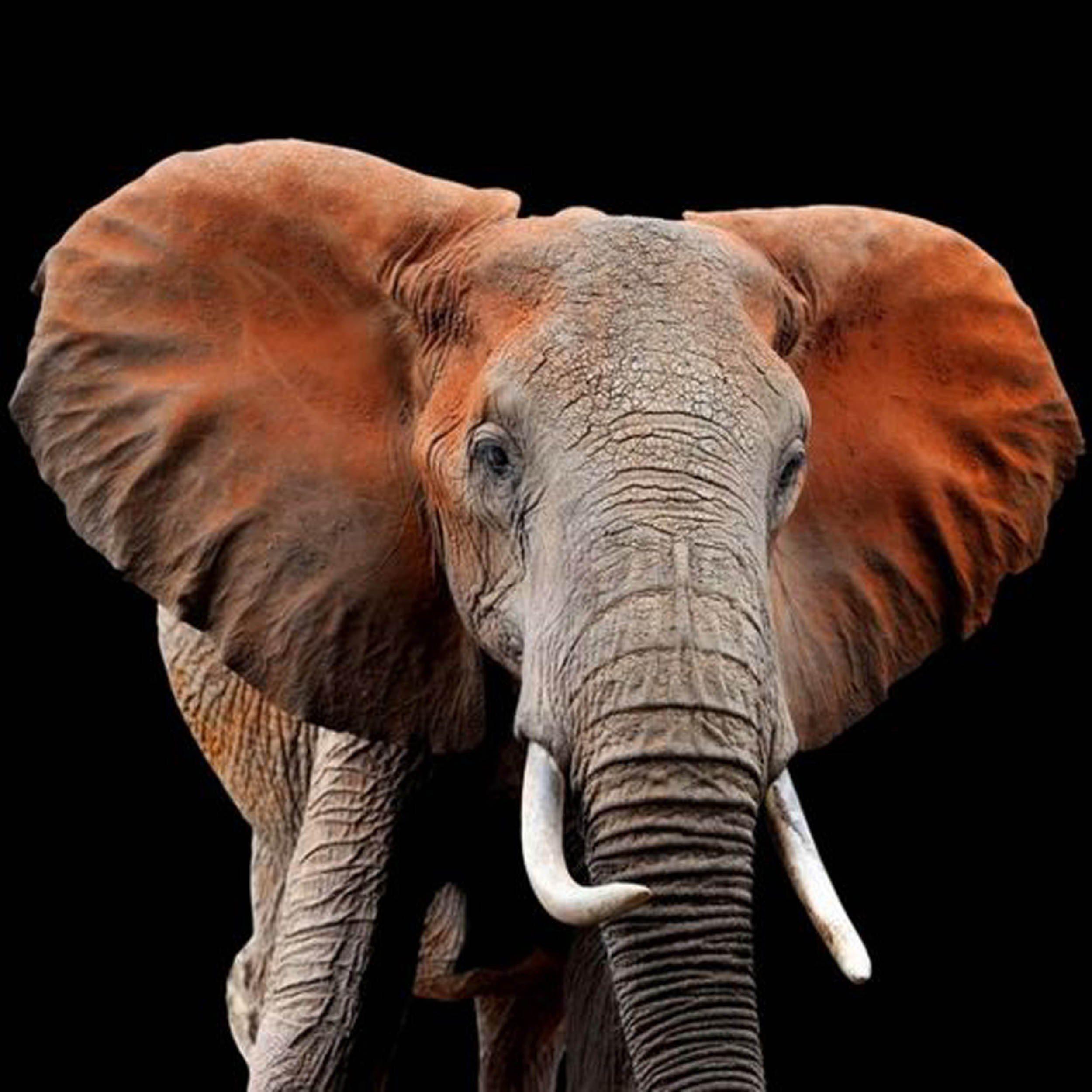 HTILiving Bild Elefant Qualittsprodukt online kaufen  OTTO