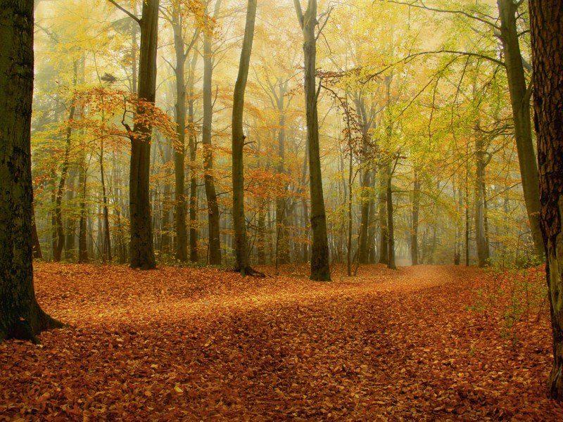 Artland Poster Leinwandbild Herbstwald Landschaften Wald