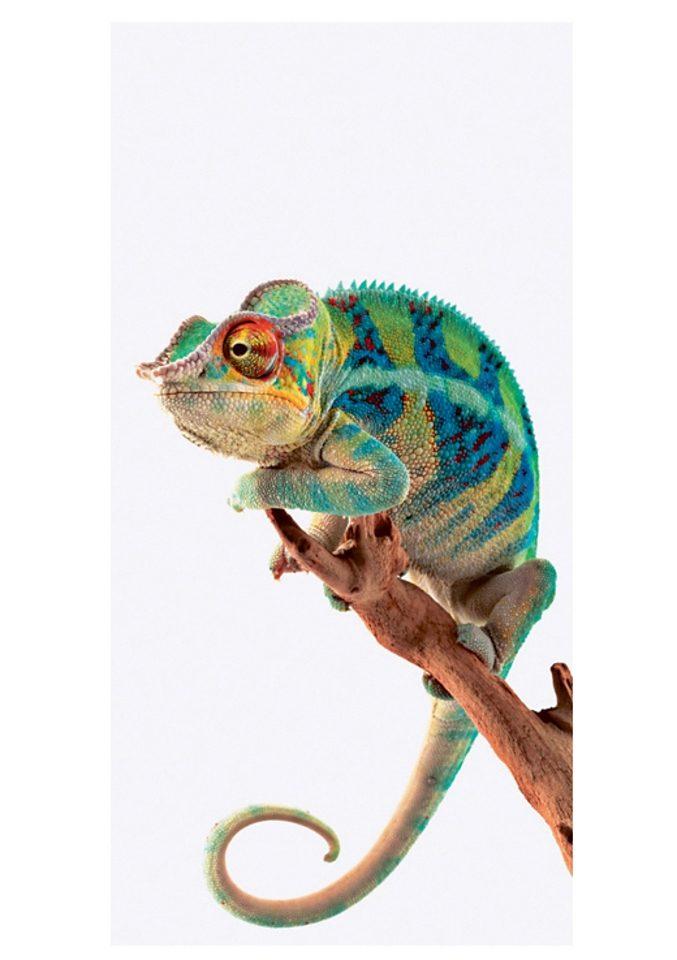 Home affaire Glasbild Ambanja Panther Chameleon 3060 cm online kaufen  OTTO