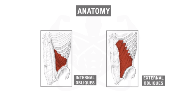 Internal-and-external-obliques-e1569665869675-1024x571.png